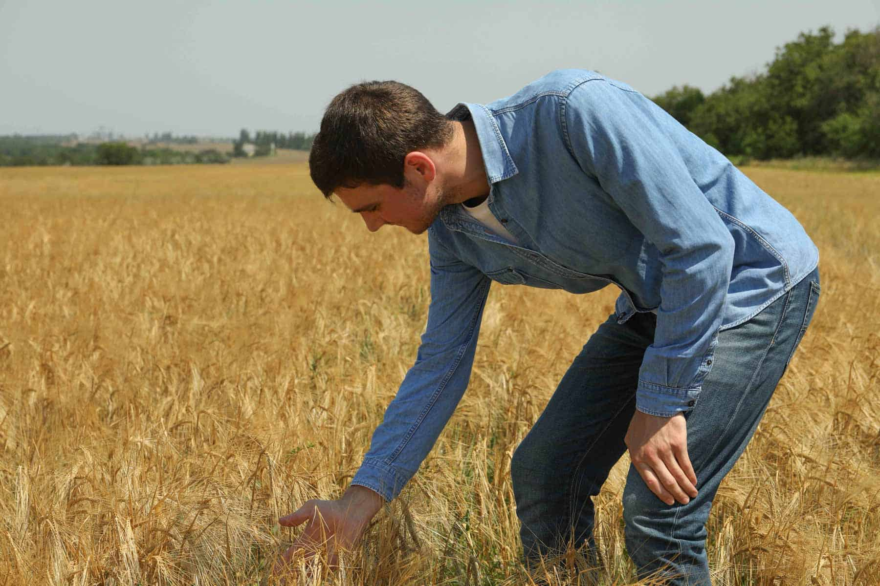 young-man-in-barley-field-agriculture-business-far-4VU7XPK__.jpg