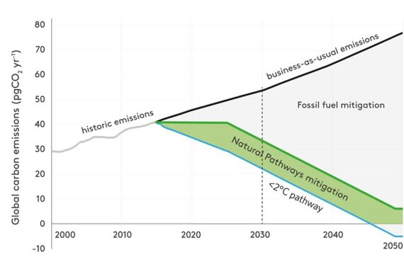 What's happening in the world of carbon?